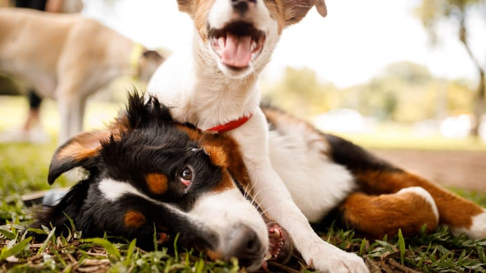 The Best Dog and Puppy Health Insurance for 2021 ...